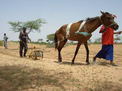 Family agriculture for food security in Louga Region - Senegal